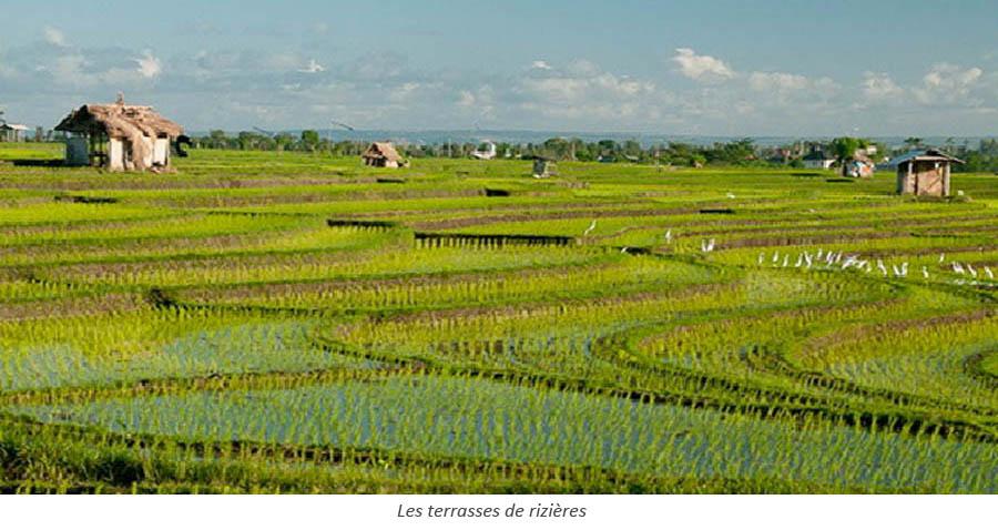 Les terrasses de rizières
