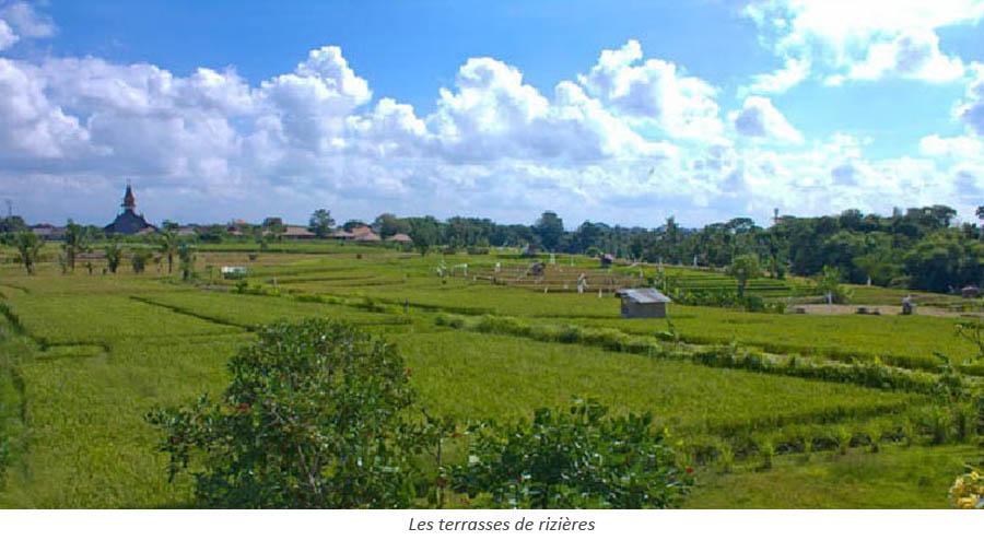 Vue panoramique des rizières de Canggu